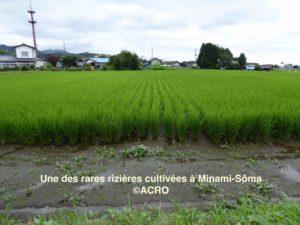 riziere_minamisouma